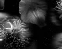 le Kiwi - Série Floralité