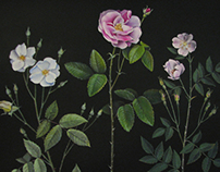 Ancestors: An Evolution of Floribunda Roses