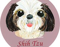 022 | Shih Tzu