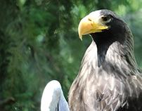 Mr Hawk