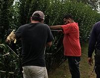 Steven Mezynieski: Caring for Privet Hedges