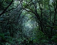 Madeiran Woods