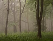Summer Mist, Wendover Woods