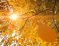 'Autumn Theme'- After Effect template