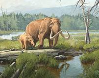New York State Museum | Boreal Bog Mural
