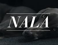 Nala - Research about how people travel with dogs.