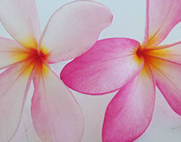 drawing with colour pencils #love #this #flower
