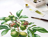 Watercolor Plants for Liquor Labels