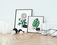 Plant illustration series