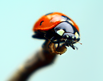 The Ladybug World