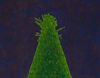 Studium zieleni - Odrosty