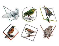 Birds Oiseaux du Québec (Martin Kronström, 2018)