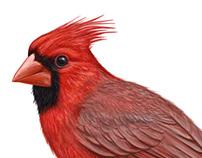 Cardinal Liquor packaging