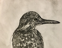 Birds - Pen on paper