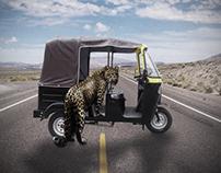 Cheetah And TokTok