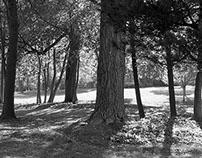 Photography- B&W- Landscape
