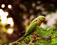 Parrot my LOVE!