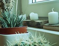 Interiors & Plants - details