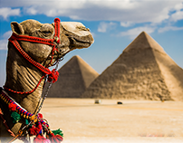 Rollups for Al Hanove Travel