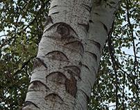 """ÁRBOL DE """"OJOS"""" / """"EYES"""" TREE"""