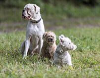Unsere Hunde