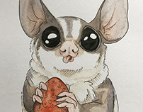 Watercolor Sugar Glider