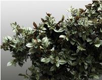 TITI foliage