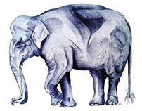 Babar, cet éléphant ...