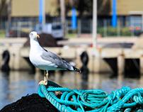 Porto de pesca de Olhão