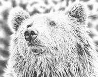 Brown Bear Pencil Drawing