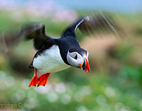A small puffin world