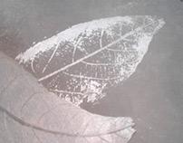 improntas vegetales sobre concreto