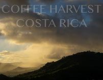 COFFEE HARVEST COSTA RICA