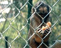 Sad Zoo