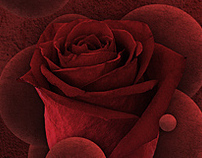 EVK - Roses