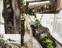 Succulent wine / liquor rack