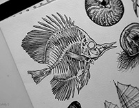 Tattoo design : Aquatic - Part III