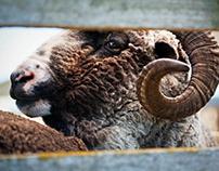 New Zealand Merino branding images