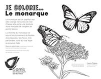 Les Amis de l'Insectarium / Projets divers