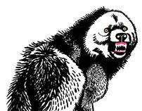 Wild Animal Illustrations