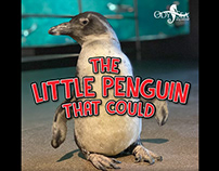 The Little Penguin that Could Video