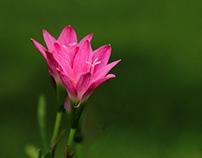 Floral Macros