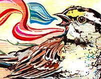 BIRD ILLUSTRATIONS!