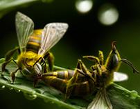 Bees -Pereira O'Dell