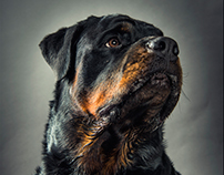 Rottweiler Bday - Photography & Retouching