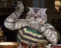 Cat Comps