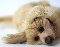 Prankish dog Buddy 2012