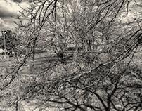 February (Monochrome)
