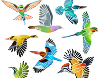 Colourful birds of Singapore