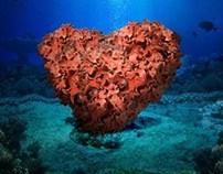 Heart Coral Reef